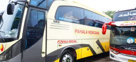 Bis Banjarnegara Jakarta Bus Pahala Kencana VIP Non Toilet